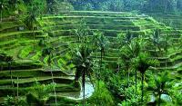 VIETNAM, CAMBOGIA, LAOS, INDONESIA, BALI